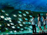 sea-aquarium-singapore