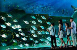 sea-aquarium-singapore
