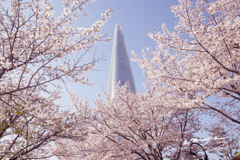 Tour Hàn Quốc 5N4Đ Mùa Hoa Anh Đào 2020: SEOUL – NAMI – EVERLAND   Du Lịch  Nam Á Châu